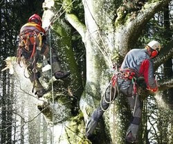 Klettergurt Tree Austria : Drayer webshop