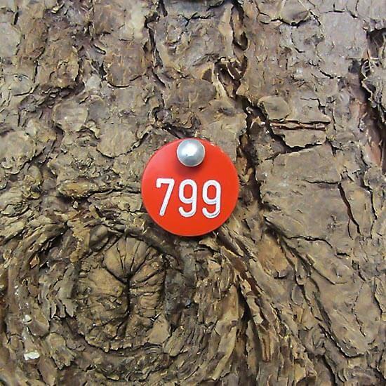 Baumplakette Rund 20 mm