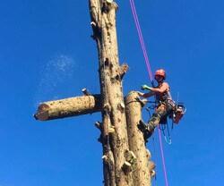 Tree Runner Klettergurt : Schlingen seile und shop drayer webshop
